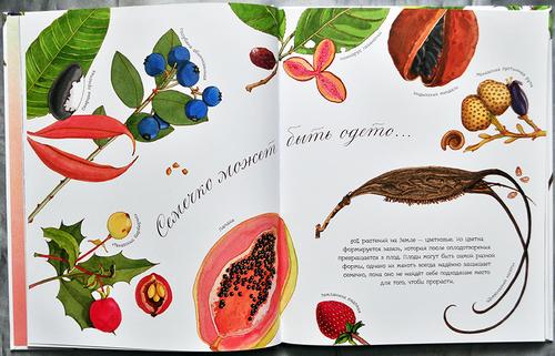Картинки с животными природой фруктами городами