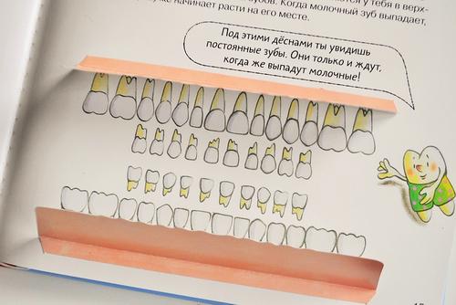 Какие зубы не выпадают у детей схема